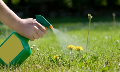 Weed Control to Guarantee a Healthy Backyard for Your Plants