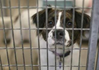 Oklahoma City Animal Shelter Offers Pets for Adoption this Holiday