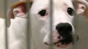 OKC Shelter Offers Half-Price Adoptions this Valentine's Day
