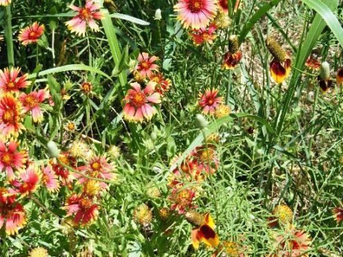 Martin Park Nature Center Offers Free Outdoor Art Festival