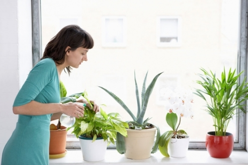 Taking Care of Your Houseplants During Winter