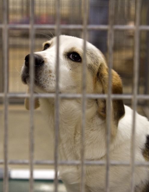 Animal Survival Rates Improving in Oklahoma City Animal Shelters